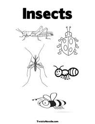 70 best insects images on pinterest coloring pages for kids