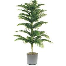 indoor plant 18 best large indoor plants tall houseplants for home and