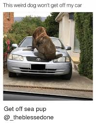 Dog In Car Meme - this weird dog won t get off my car get off sea pup cars meme on
