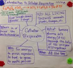 mrs paul biology 10th grade biology notes charts 2014 2015