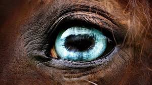 Are Horses Color Blind Blue Eyes U2013 Of Horse Created By Horse Enthusiasts For Horse