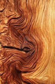 best 25 wood grain ideas on wood texture tung