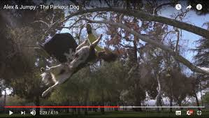 parkour for dogs