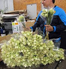 wholesale flowers near me 15 best images on cold sore and health