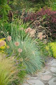 132 best grasses in the landscape images on