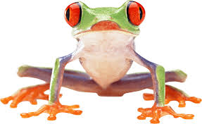 clown frog transparent png stickpng