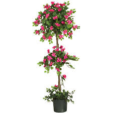 5 foot mini bougainvillea topiary potted 5228