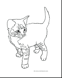 cutest kitten coloring pages newborn cute baby wolf free printable