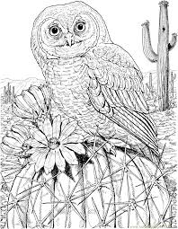 mexican spotted owl on cactus coloring page free owl coloring