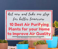 best plants for air quality 10 best air purifying plants for your home to improve air quality