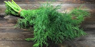 herbe cuisine recettes à base d aneth cuisiner l aneth