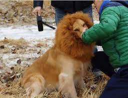 Dog Halloween Costume Lion Mane Canine Store Pet Dog Costume Lion Mane Wig Christmas