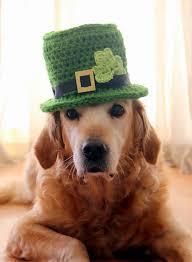 st patrick u0027s day dog hat leprechaun hat for dogs