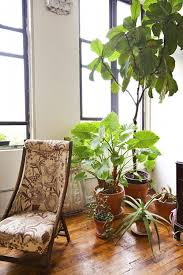 home interior plants 20 best indoor plants inside plants for small space gardening