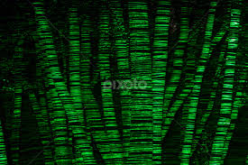 presence of trees at thanks to a green laser light