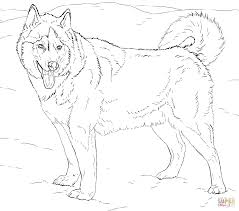 alaskan husky coloring page free printable coloring pages