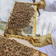 colorado hemp honey is the bee u0027s knees westword