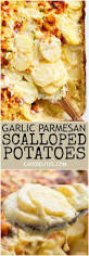 thanksgiving scalloped potatoes garlic parmesan scalloped potatoes recipe creamy garlic sauce