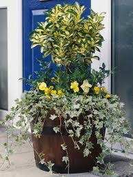winter container gardens hgtv