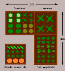 raised vegetable garden layout gardening ideas