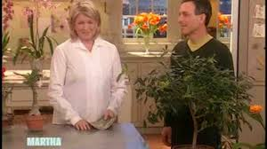 video indoor flowers and edible plants martha stewart