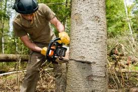 proper tree cutting procedures home guides sf gate
