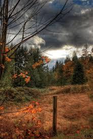 imagenes de paisajes lluviosos fotos gratis paisaje árbol naturaleza bosque desierto rama