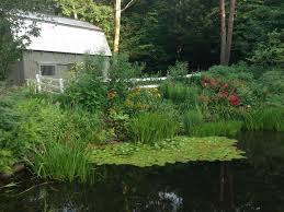 new england native plants new england gardening new england habitat gardening blog