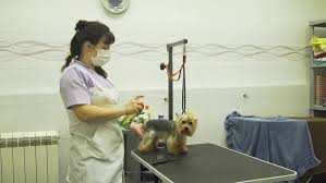 dog grooming tables for small dogs pet grooming salon grooming a little dog in pet grooming
