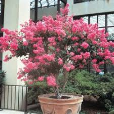 16 best garden ideas images on plants small trees and