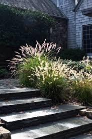 29 best ornamental grasses images on pinterest ornamental