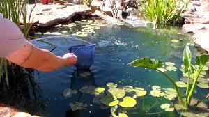 aquaculture indoor ponds japanese koi pond designer wonderful use