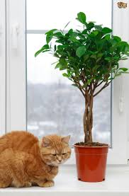 home decor plants exciting house plants toxic to cats 38 for your home decor photos