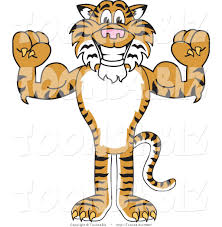 vector illustration of a cartoon tiger mascot flexing by toons4biz