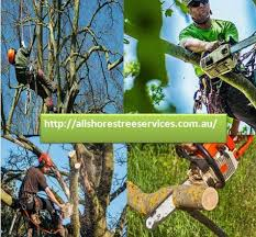 the 25 best tree trimming service ideas on tree