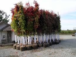 Large Planters For Trees 6 read about ways to plant trees gibneyce com