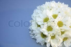 Wedding Flowers Background Wedding Flower Background Stock Photo Colourbox