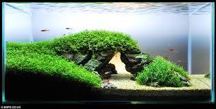 japanese aquarium zen and the art of fish tank maintenance aquascapers herald the
