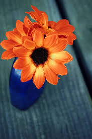 complementary colors complimentary color orange cilif com