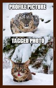 Lil Bub Meme - profile pic vs tagged photo 23 pics smosh