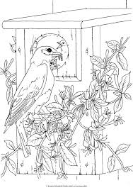 sample page creative haven beautiful birds coloring book sample page 1 welcome