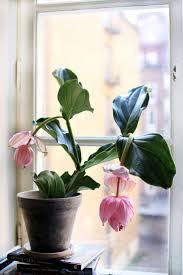 best 25 flowers in bloom ideas on pinterest garden flower