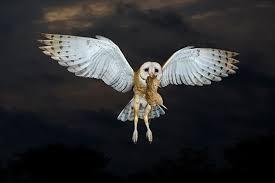 Barn Owl Photography Alan Murphy U0027s 4 Practical Tips For Better Bird Photography