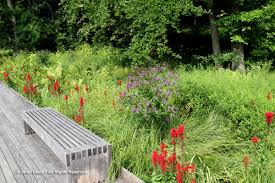 native plant garden a visit or two to new york botanical garden janet davis
