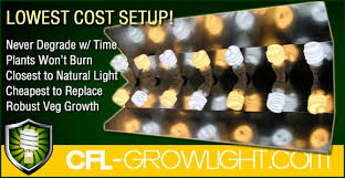 cfl lights for growing weed the best cfl grow lights in detroit high powered 2000 watt cfl
