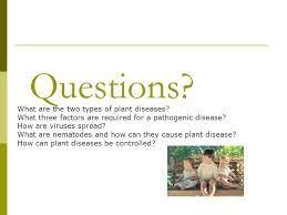 Types Of Plant Disease - basic plant pathology jennifer davidson author mila pearce ppt