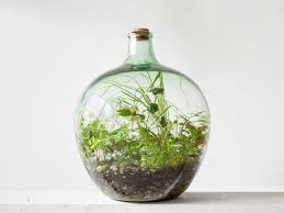 sealed bottle garden london terrariums