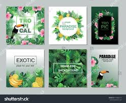 tropical cards collection vector banners stock vector