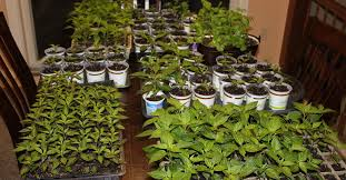 beautiful indoor container gardening gallery interior design