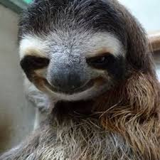 Sloth Whisper Meme - sloth ifunny
